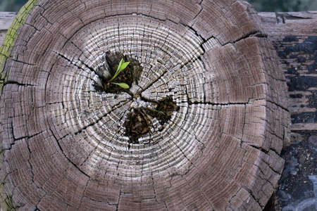 Cross section of cut wood. Close up of a tree trunk with a leave coming out