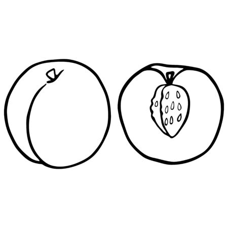 Outline fruit peach. Vegan, vegetarian diet. Raw food ingredient. Vegetarian nutrition. Sweet fruit. Isolated vector illustartion. Imagens - 129222268