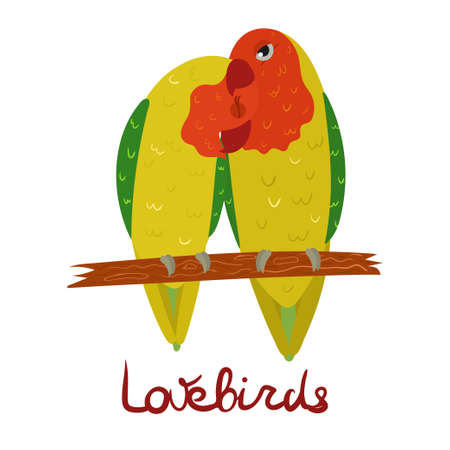 Parrot Lovebird in cartoon style on white background. Vector hand drawn illustration. Agapornis parakeet. Vector Illustratie