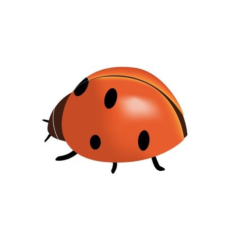 coccinellidae: Vector ladybird Illustration