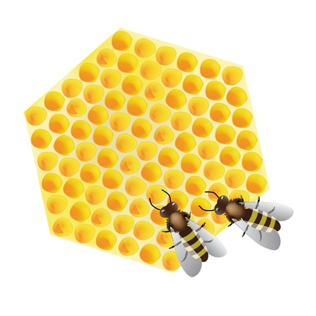 studious: Vector - working bees on honeycomb