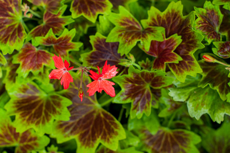 leafs: red flowers in green leafs