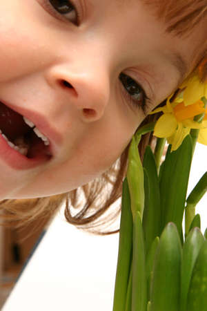 smiling child and yellow daffodils isolated on white photo