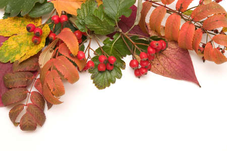 border made of autumn leaves and wild forest fruits photo