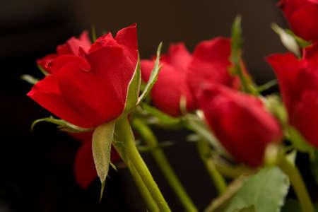 beautiful red roses on black reflecting background photo