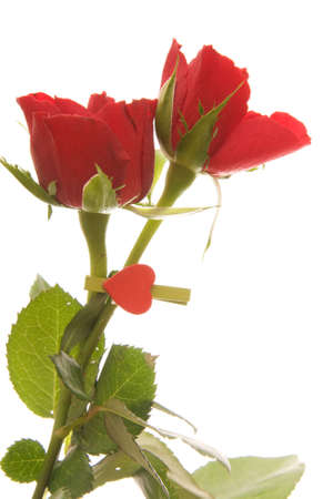 beautiful red roses and heart shaped clothes peg isolated on white photo