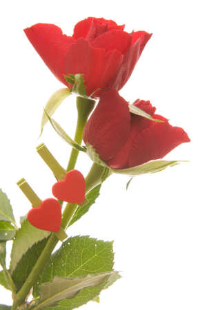 clothes peg: beautiful red roses and heart shaped clothes peg isolated on white