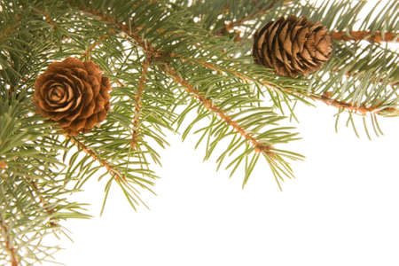 Christmas frame made of spruce and cones photo
