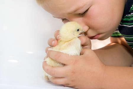 pollitos: ni�o hablando con amarillo pollito de Pascua