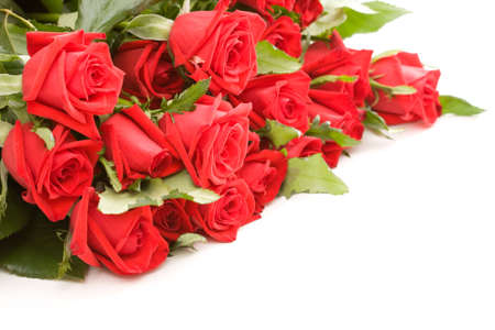 bunch of red roses on white background photo