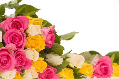 bunch of yellow, pink and ivory roses on white background photo