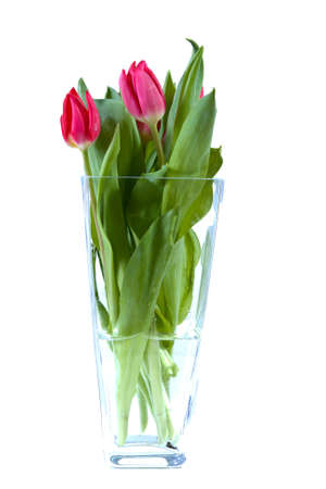 tulips in vase: fresh spring tulips on white background