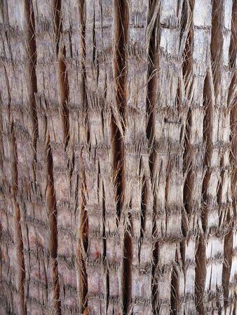 Palm texture background photo