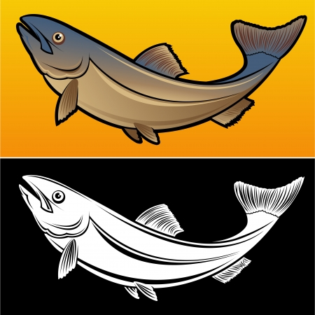 carp fishing: Salmon Fish, 2 versions Illustration