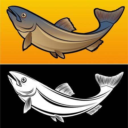 carp fishing: Salmone Pesce, 2 Illustrazione versioni