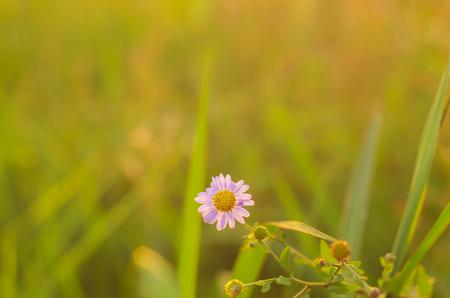 tenacious: Flowers under the sunset