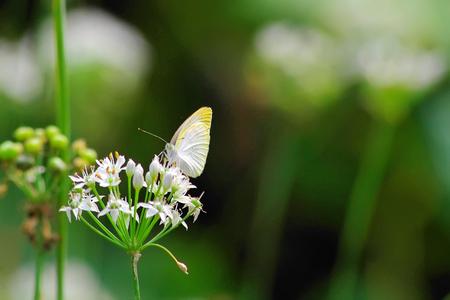 fluttering: Butterfly fluttering