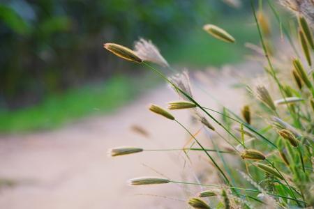 weeds: Weeds