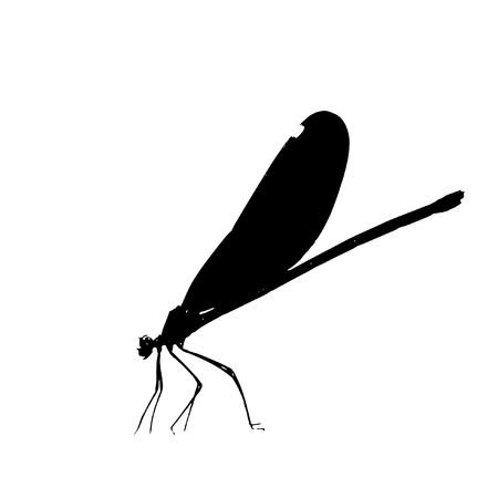 insecta: Dragonfly