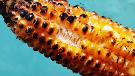 Roasted corn isolated on green background