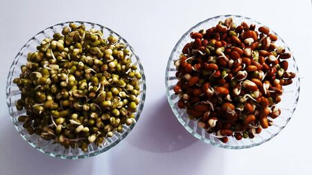 healthy sprouted lentils in bowl isolated on white background