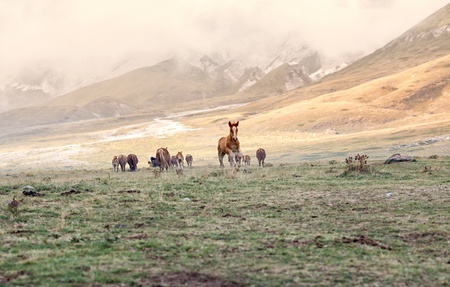 abruzzo: A free little horse on the  Gran Sasso  mountain - Abruzzo Italy Stock Photo