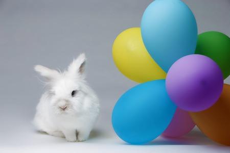 small white rabbit in studio on light background