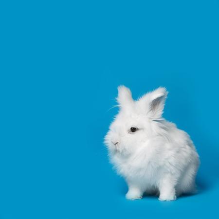 Video de pequeño conejo blanco en la pantalla azul