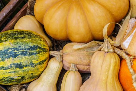 pumkins from an autumn harvest Stock Photo