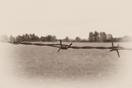 Barbed wire and a forest in the background, as in an old postcard Stock Photo