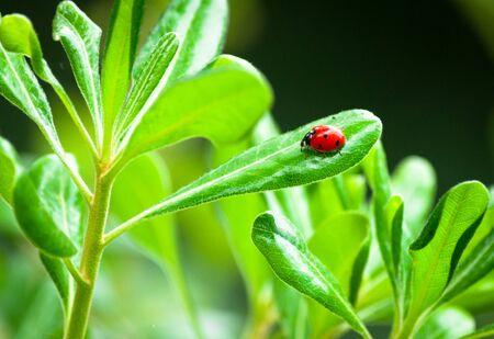 Closeup of ladybug on a leaf in a garden Reklamní fotografie