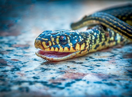 forked: Closeup of little snake head