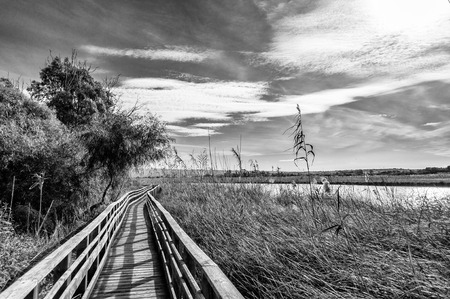 Wooden bridge in the middle of pond of platamona - Sardinia