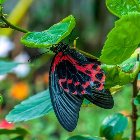 Colorfull Tropical butterfly in a garden Stock Photo