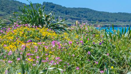 Prairie fleurie près de la plage dans une journée ensoleillée de printemps Banque d'images - 99385853