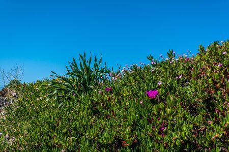 Prairie fleurie près de la plage dans une journée ensoleillée de printemps Banque d'images - 99879284