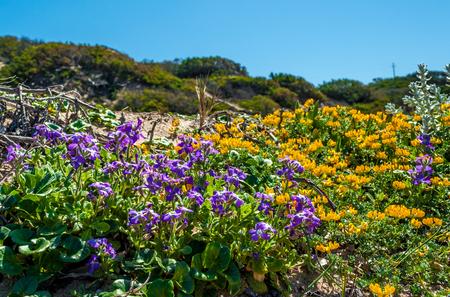Prairie fleurie près de la plage dans une journée ensoleillée de printemps Banque d'images - 99909312