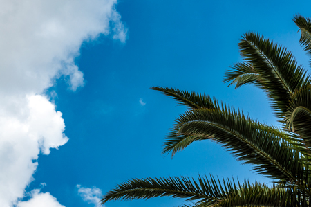 Palm leaves under a blue cloudy sky  in spring