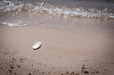 cuttlefish bone on the beach near the sea water