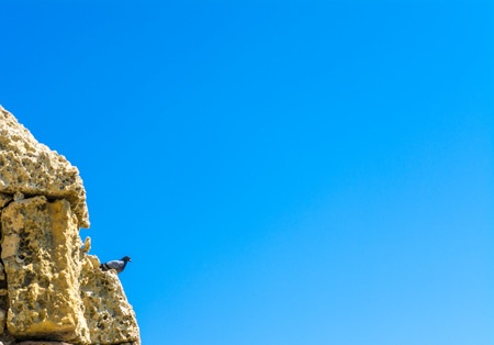 Closeup of pigeon on an old wall under the blue sky
