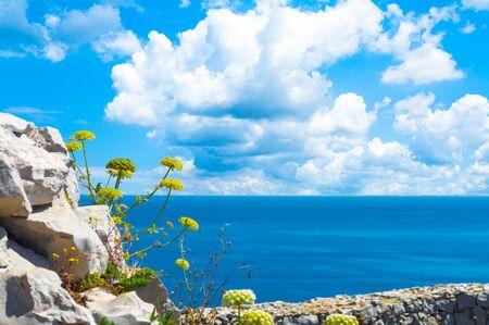 Wild flowers on the coast of Capo Caccia, in Sardinia