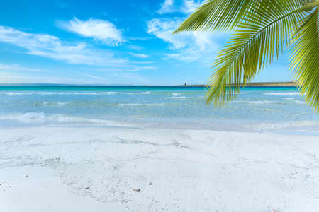 landscape of empty tropical beach with white sand and turquoise water with palm leaf