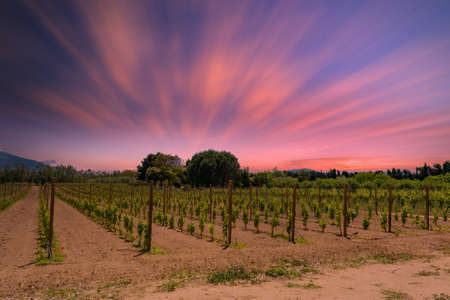 Landscape of vineyard in a dramatic red sunset with long exposure clouds