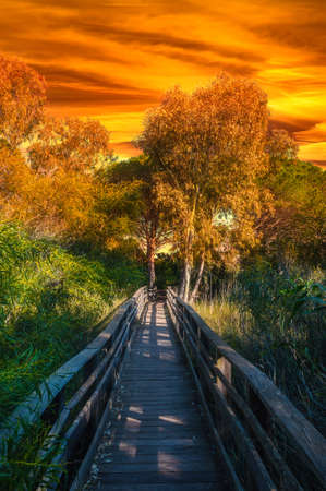 wooden path in pine forest at dramatic red sunset Foto de archivo