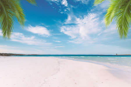 Landscape of tropical beach in a sunny day with palm leaves, white sand and crystal clear water