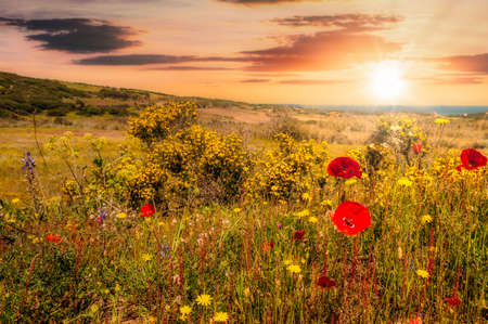 flowery meadow near the beach in at sunset with sun lens flare