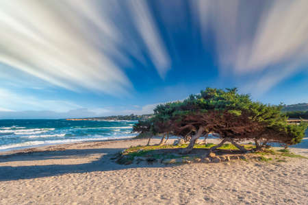 seascape with tree on the beach in a sunny day with long exposure sky
