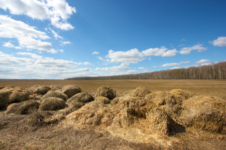 haymow: Straw on spring field Stock Photo