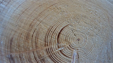 Wooden backround texture annual ring wood design
