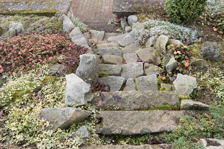 Stairs in a small rockery with herbs